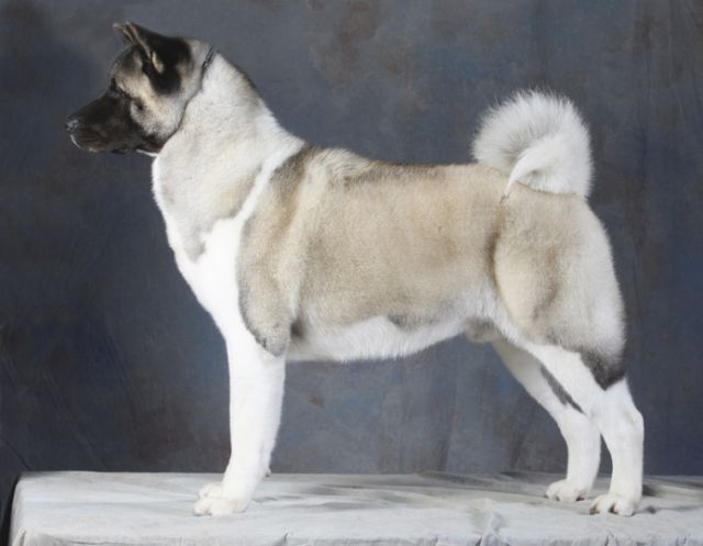 forskellige hunde billeder